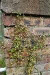 Paddock wall