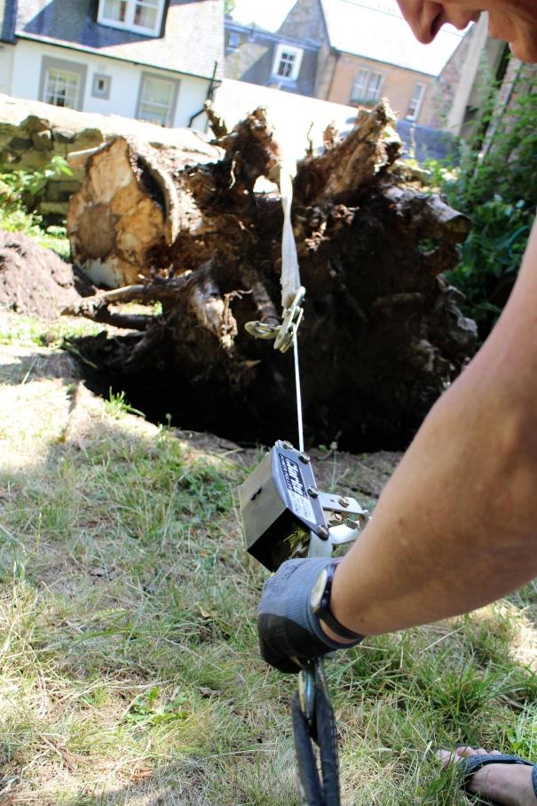 removing fallen tree