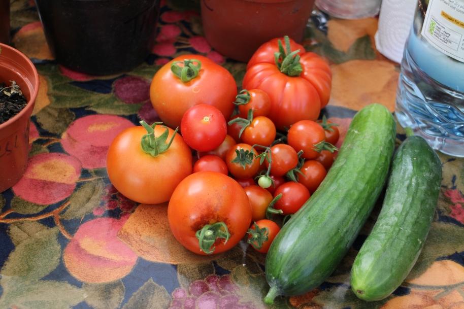 Freshly Harvested
